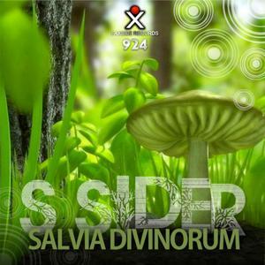 Salvia_Divinorum