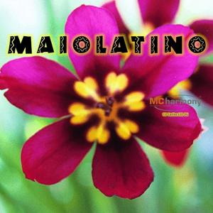 Maiolatino