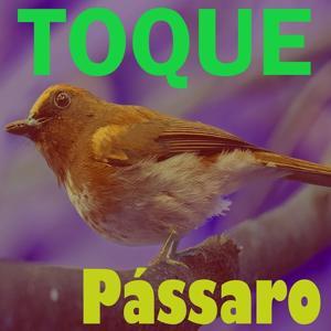 Toque Pássaro