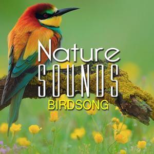 Nature Sounds: Birdsong